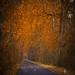 road of gold - EXPLORE #1 - 01/02/12
