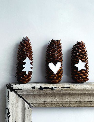 Pine Cones | by Heath & the B.L.T. boys