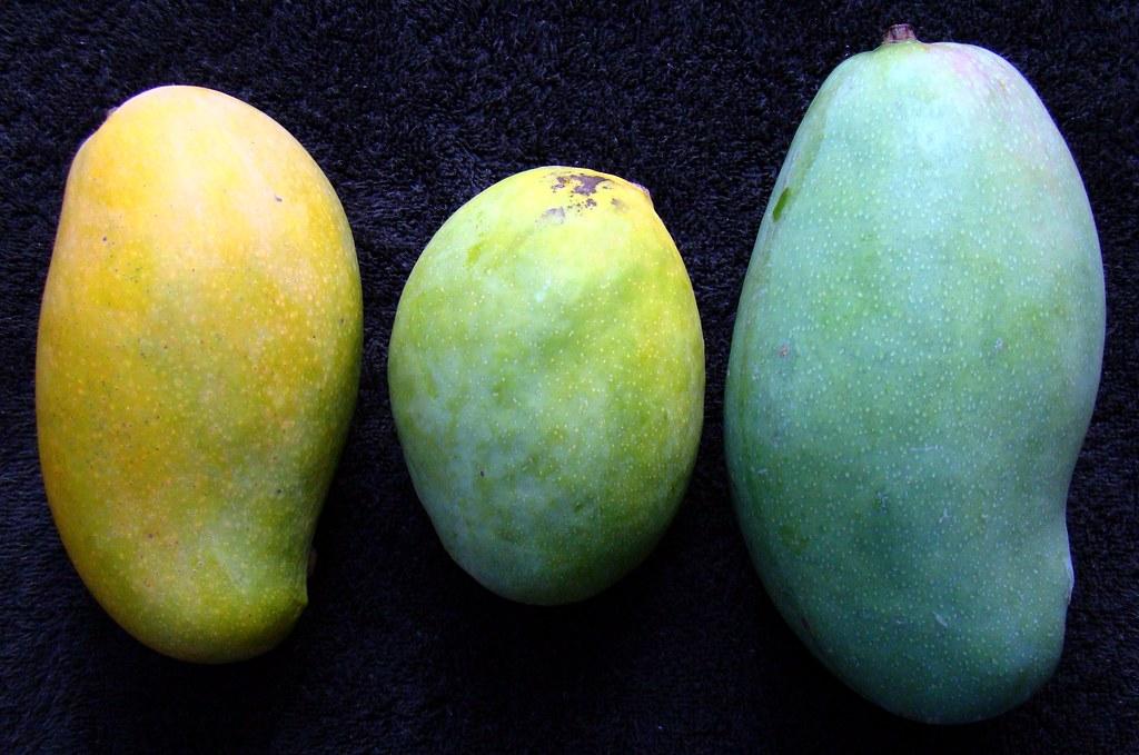 Left Right And Center >> MANGO #293: COMPARISON of 3 Varieties | Left = MALLIKA (ripe… | Flickr