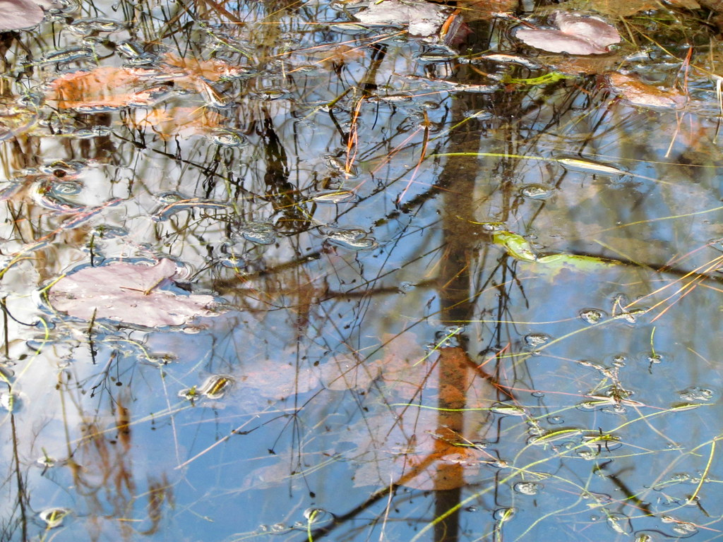 Closeup Reflection Wetlands Weymouth Woods Sp Nc 5151 Flickr