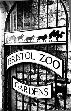 Bristol zoo business objectives