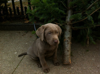 silas tree ~8 weeks | by Rosebud {s}
