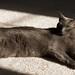 Bella, International Cat of Mystery