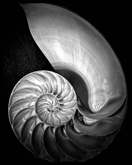 Edward Weston: the greatest American photographer of his generation?