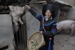 Feeding her pig | by Heifer International