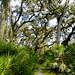 Myakka-Boylston Nature Trail-5