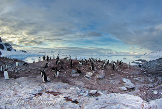 Penguin colony at Antarctica | by jan-borgstede