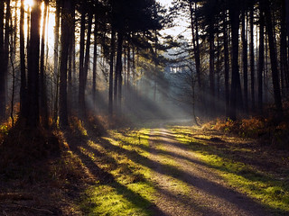 Rays of Light in Sherwood Forest | by DaveKav