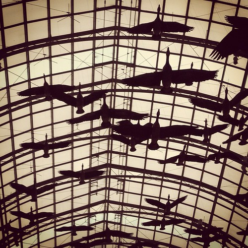 Eaton Centre flight path | by andreakw