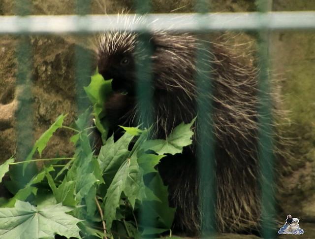 Tierpark Berlin 28.05.2016  0287