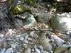 Remontée du Carciara : restes de câble métallique