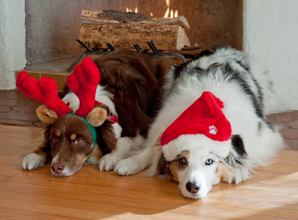 Merry Christmas Dogs And Cats