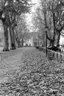 Queen Square, Leafy | by barnoid