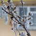 Winter at Window
