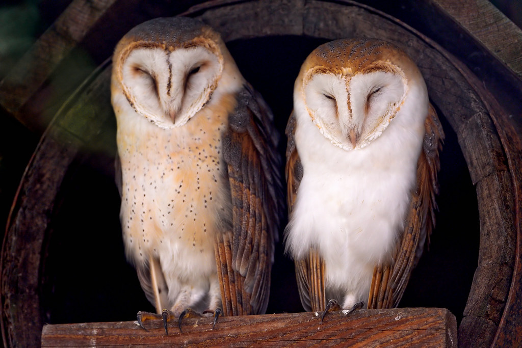Two cute owls   It wasn't a good situation with the light ...