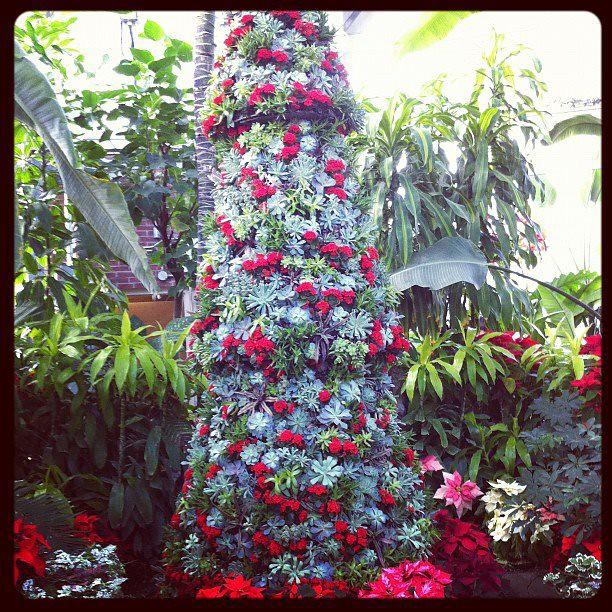 Succulent Christmas Tree At Allen Gardens Http Instagr A