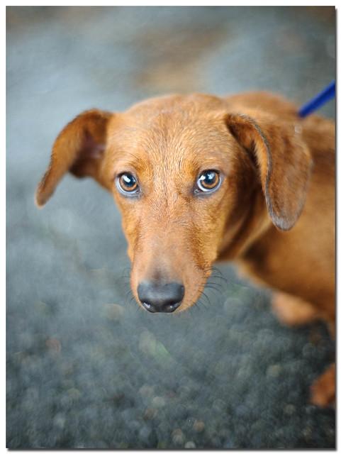 Dog Adoption Seattle Eastside