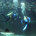 Diving with rays, Two Oceans Aquarium