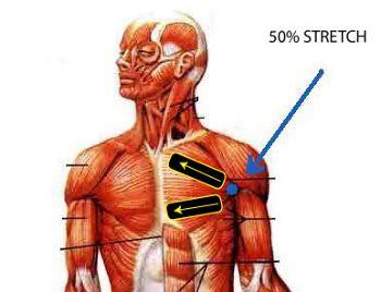 kt tape for pectoral muscle kt tape flickr