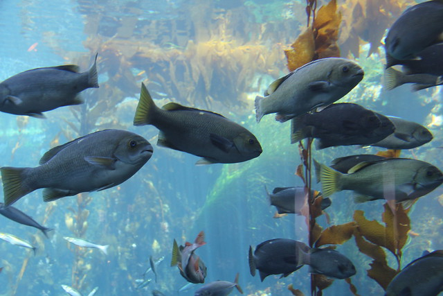 Monterey Aquarium Explore Iansand 39 S Photos On Flickr