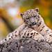 Cub posing on the rock