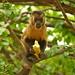 Macaco-prego_2012  28053