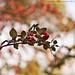 Berries ~ 334 365