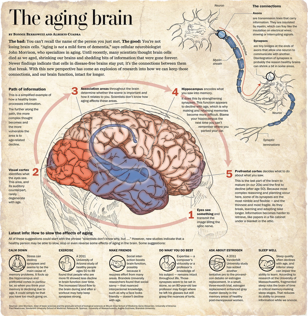 how aging effects the structure of