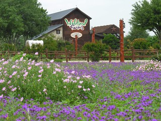 Wildseed Farms-The Largest Working Wildflower Farm in the World. Fredericksburg, Texas  www.wildseedfarms.com