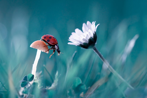 The story of the lady bug that tries to convice the mushroom to have a date with the beautiful daisy because it is so cute and they are for sure made for each other :) | by Fab. B