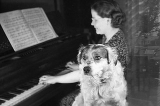 Rover Enjoying the Music - 1941 | by marlcal