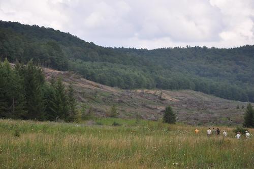 Lambert Run Red Spruce Restoration Project