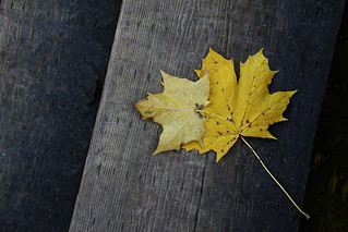 Fallen Leaves | by dellie.ca