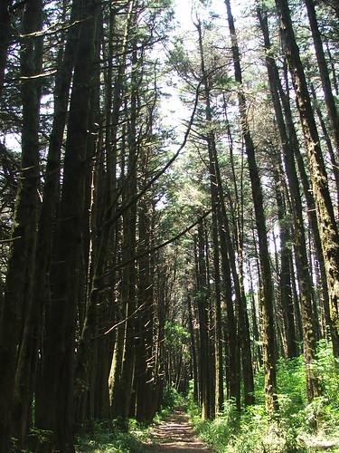 Bosque De La Hoja San Rafael De Heredia Costa Rica Flickr