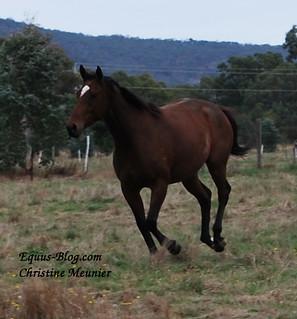 The Jockey Agent as a Career Choice | Equus Education