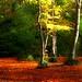 Woodland puddle