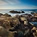 The Coast of Point Lobos