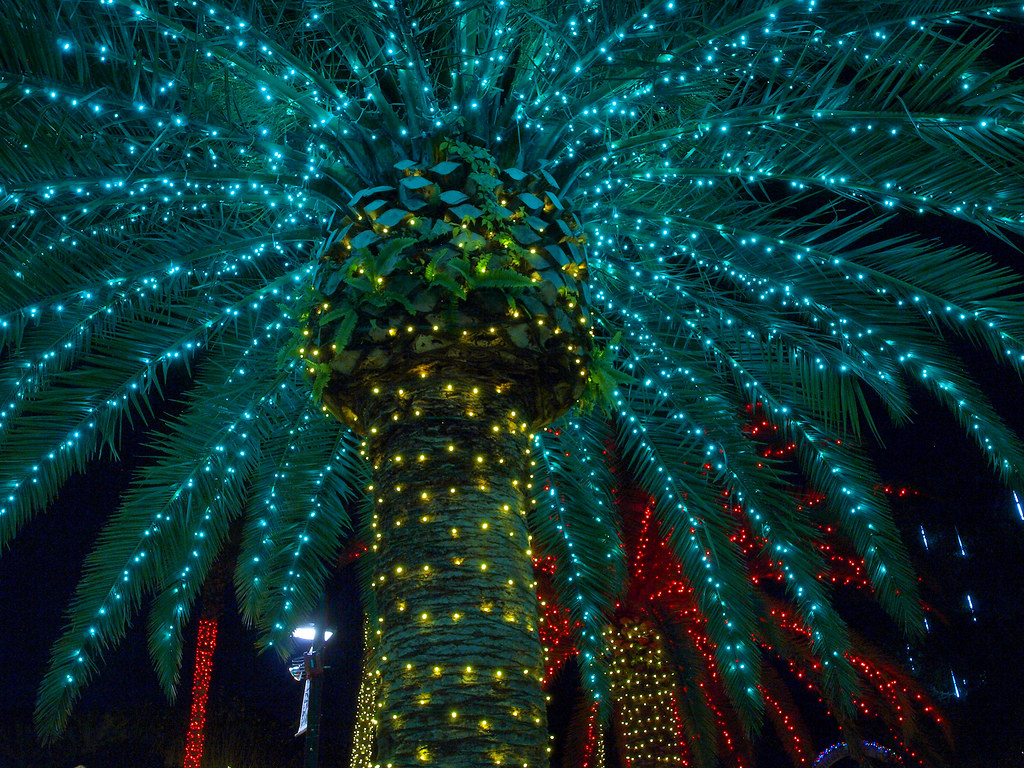 Palm Tree | Holiday Lights at the Florida Botanical ...