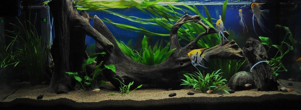 240l s damerika aquarium die zierde unseres wohnzimmers u flickr. Black Bedroom Furniture Sets. Home Design Ideas