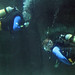 Diving, Two Oceans Aquarium