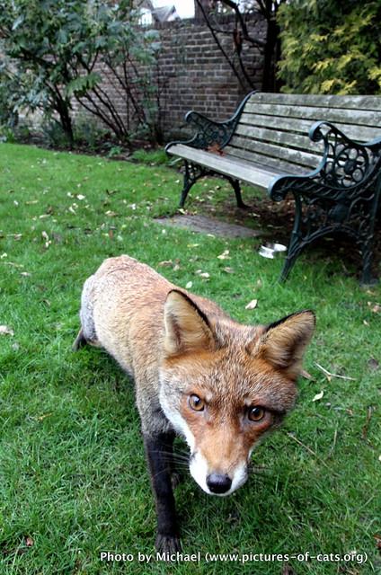 Freddie Fox, Barnes, London