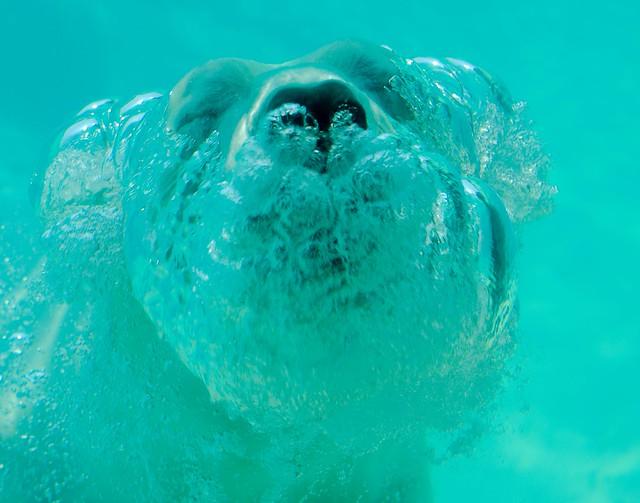 Polar Bear_83