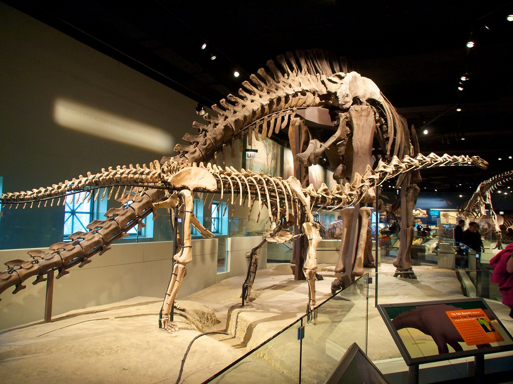 Dinosaur Field Museum Chicago Il Yuxuan Wang Flickr