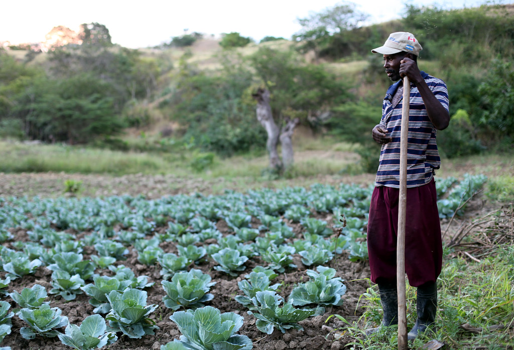 Food Security and Agriculture in Haiti Hit Hard by ... |Haiti Farming