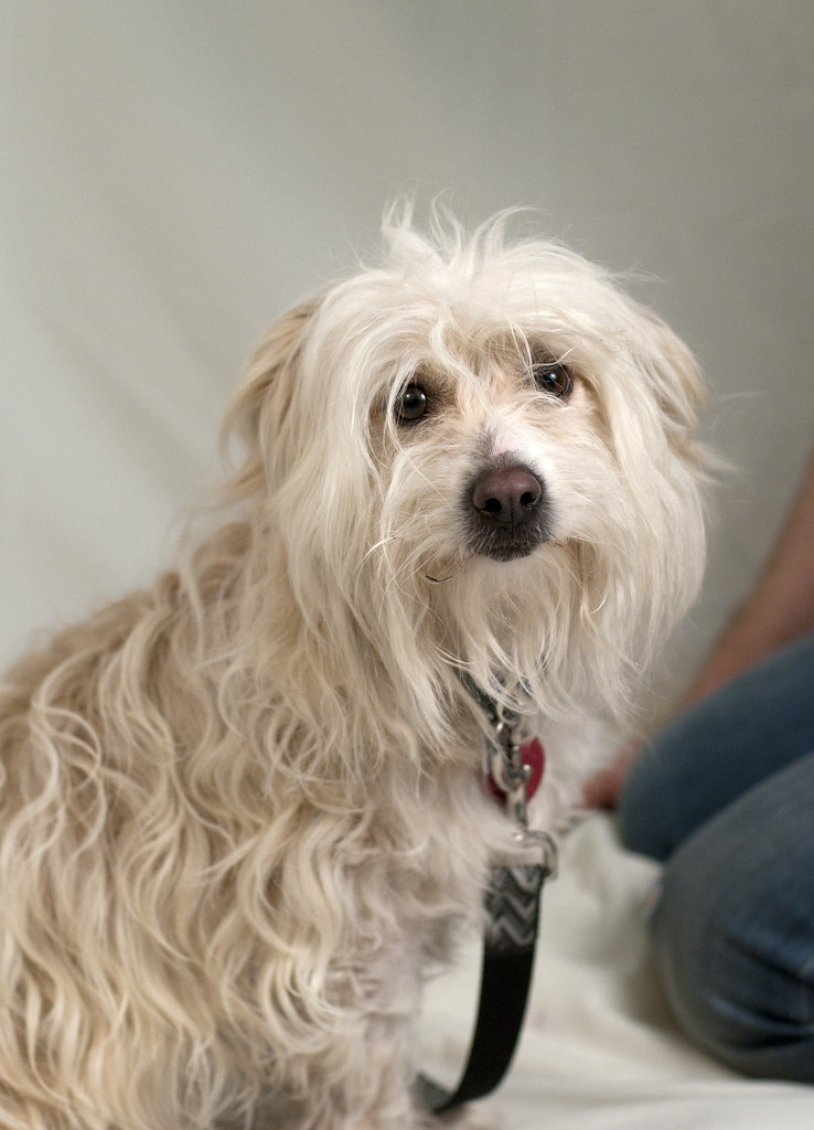 Faitful Companions Dog Rescue Trenton Nj