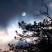 Solstice sun 01