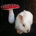 bunny and red umbrella mushroom