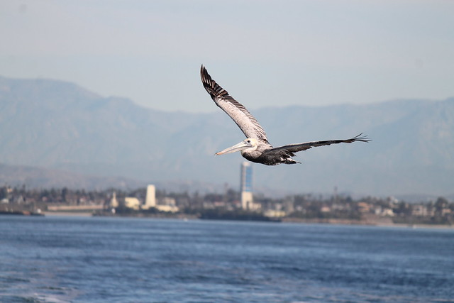 Pelican Harbor Food Bank To Tower