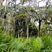 Myakka-Boylston Nature Trail-8