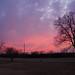 Purple & pink sky